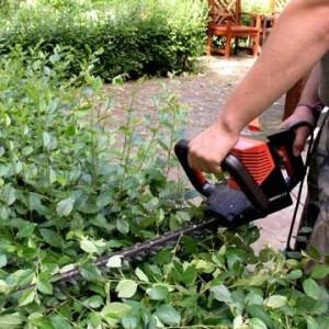 Кусторез – незаменимый инструмент в саду
