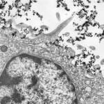 Ученые создали инновационный наноматериал для фильтров и респираторов